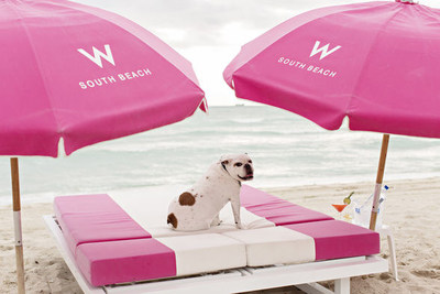 Miami Beach is a paradise for vacationers and their pets, offering the best weather and a host of pet-friendly destinations including award-winning hotels, one-of-a-kind entertainment venues, fabulous restaurants and retailers.