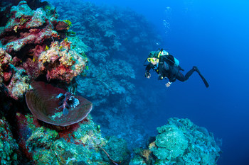 Near Seven Mile Beach, Grand Cayman, British Overseas Territories. (Credit: Jill Heinerth/ Canadian Geographic) (CNW Group/Royal Canadian Geographical Society)