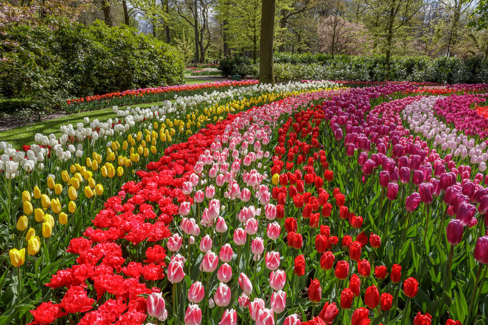 The 69th edition of Keukenhof opened this morning to the general public. The 2018 Keukenhof theme is 'Romance in Flowers'. (PRNewsfoto/Keukenhof)