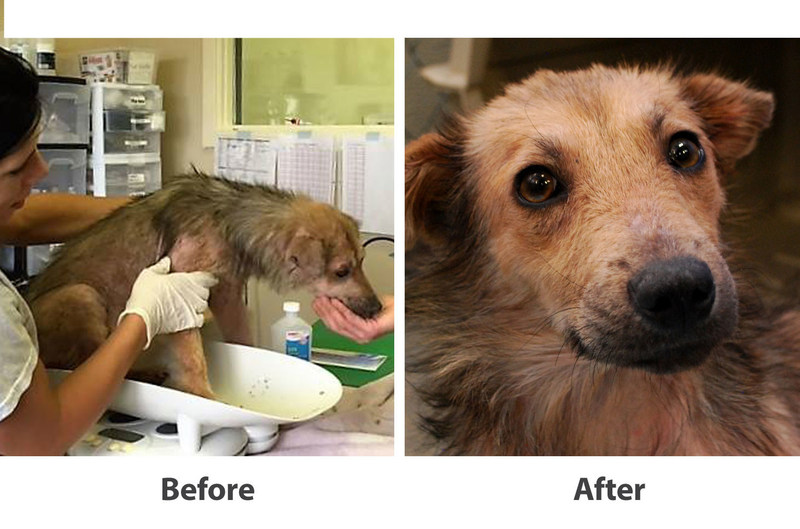 Before and after of Odessa, pup helped by the Bayer and Adopt-a-Pet.com Treated with Love grant.