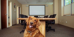 Pets Best, a leading U.S. pet insurance agency based in Boise, Idaho, is spearheading the advancement of pet insurance as a growing trend in the highly evolving employee benefits arena.