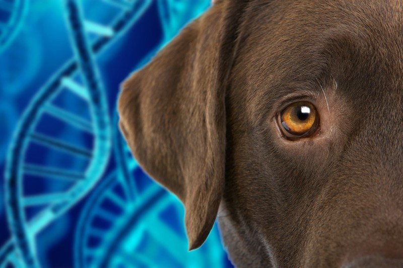 Mars Petcare Acquisition of OptiGen, LLC Will Enable Discovery of New Genetic Health Markers for Dogs (PRNewsfoto/Mars Petcare)