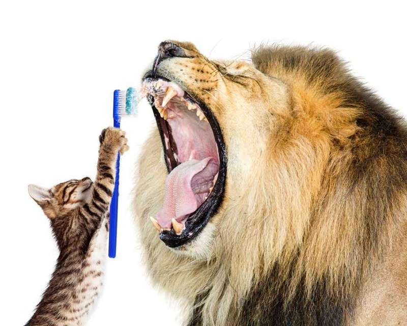 Keeping your cat's mouth healthy is a great investment. Uniquely Cats Veterinary Center in Boulder, CO offers a state of the art dental suite just for cats.