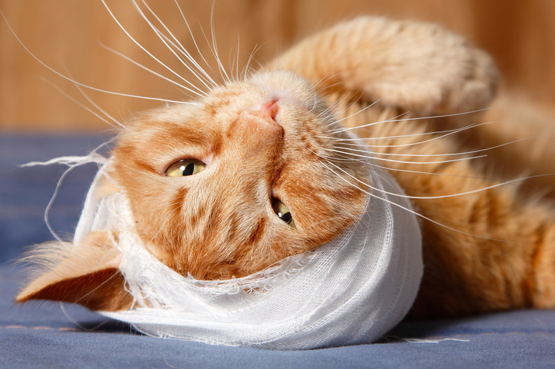 """Cats are masters at hiding pain. It's a survival instinct. So, just because your cat is """"acting normal"""" doesn't mean they aren't in pain. Let one of our exclusively feline veterinarians assess your kitty's mouth."""