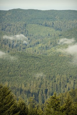 New initiative, Redwoods Rising, fast-tracks the growth of healthy redwood forests on 40,000 acres of parklands — providing clean air and water, storing carbon and fighting climate change. (Photo courtesy Save the Redwoods League)