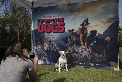 "Pup posing at ""Superpower Your Dog Day"""