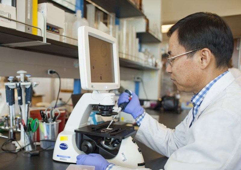 Dr. Seungil Ro of the University of Nevada, Reno School of Medicine, shown here in his lab, continues his research with the support of YUYANG Dnu of South Korea.