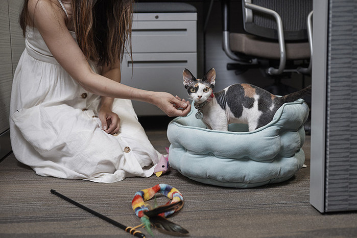 Petco Encourages Employers to go Pet-Friendly in Honor of National Pets @ Work Day