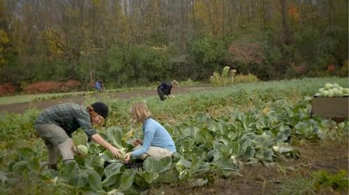 On connaît Montréal pour son agriculture urbaine, mais sa zone agricole est un secret bien gardé. (Groupe CNW/Union des producteurs agricoles)