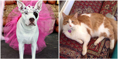 Nationwide 2018 Wacky Pet Names Winners Isabella Miss Worldwide Boo Boo and Pablo Purrcasso.
