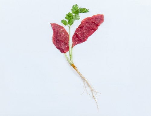 Aleph Farms Beefs Up Clean Meat