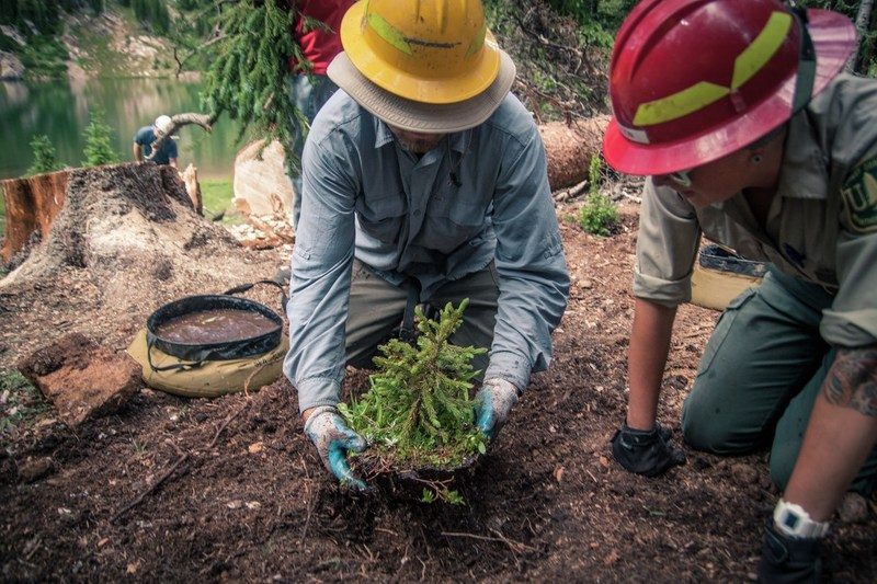 REI to donate up to $1 million to the National Forest Foundation in 2018.