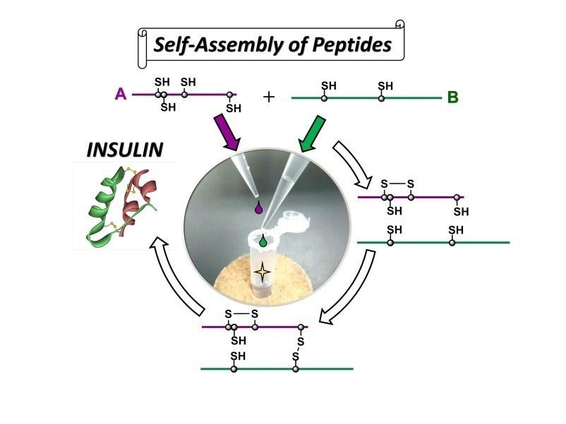 A simple protocol developed for insulin preparation (PRNewsfoto/Tokai University)
