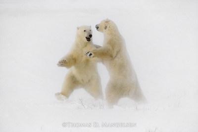 """Polar Dance"" by Thomas D. Mangelsen."
