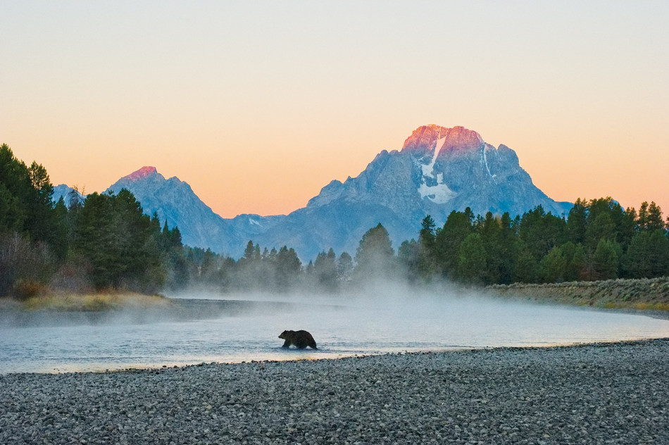 """""""First Light - Grizzly"""" by Thomas D. Mangelsen."""