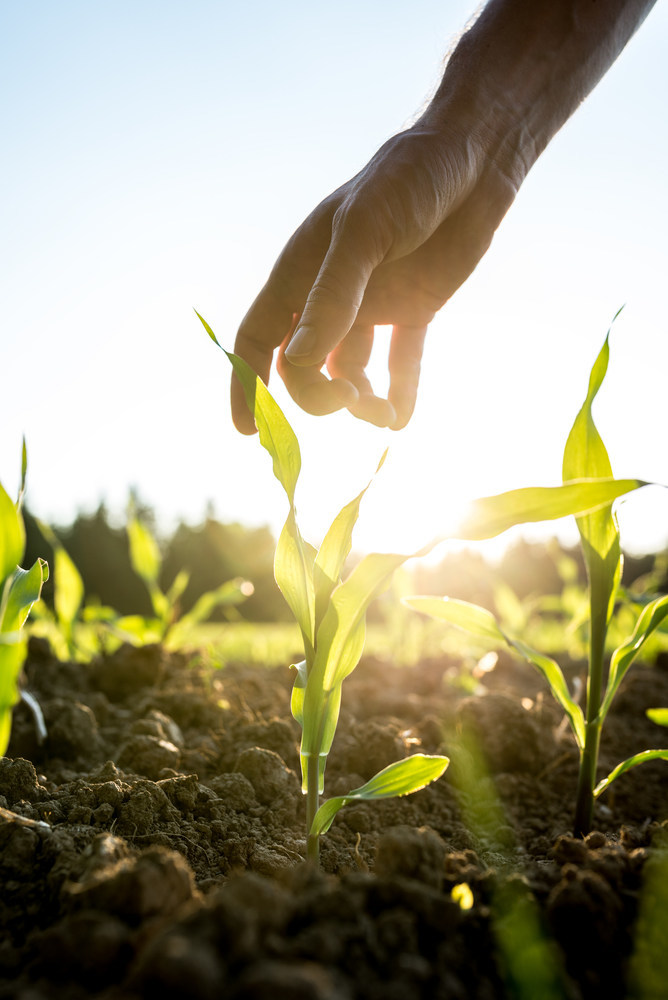 Beck's and Benson Hill Biosystems Partner to Deliver a Novel Photosynthetic Efficiency Trait to Corn Farmers