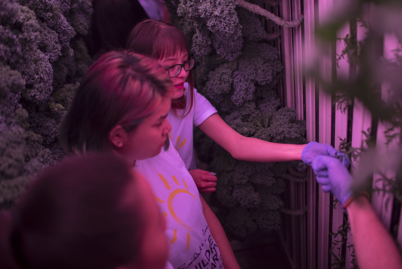 Students from La Loche Saskatchewan train to grow and harvest their own produce in the purple glow of a state-of-the-art modular farm. The $220,000 farm was granted to them by PC Children's Charity as the first of a new series of innovation grants which award transformative Canadian projects that combat childhood hunger and poor nutrition. (CNW Group/Loblaw Companies Limited)