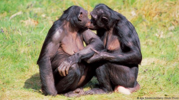 Bonobos, which are humankind's closest living relative, are only found in the DRC and are threatened due to poverty and conflict that fuel the hunting of wild animals for food