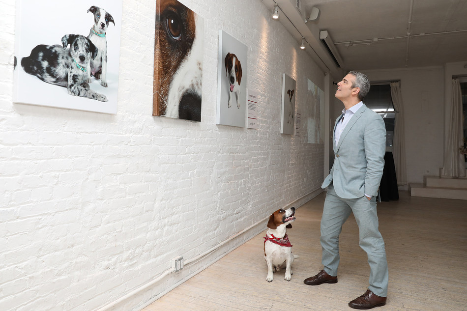 Andy Cohen admires the visible differences he's seen in Wacha by feeding Purina ONE at Gallery 28 in New York City on Tuesday, May 22. The gallery features never-before-seen photos of Andy and Wacha in their home. Purina ONE is donating $5, up to $28,000, to the Petfinder Foundation for every person who signs up for the Purina ONE 28-Day Challenge between May 22 and June 30 to help more dogs, like Wacha, find their forever homes.