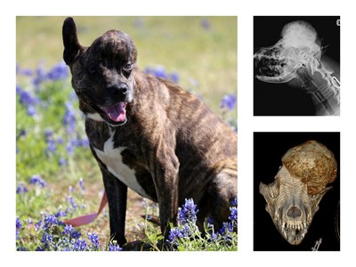 Rescued USA Shelter Dog with Rare Skull Tumor Gets Second Chance with an Australian 3D Printed Implant in the Hands of Canadian Veterinary Surgeon