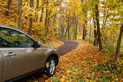 Autumn Driving Tips!
