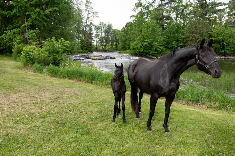 Mare and her foal at RCMP Pakenham Breeding farm (CNW Group/Royal Canadian Mounted Police)