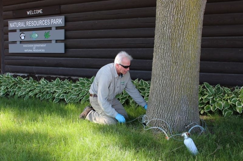 Jeff Palmer performing a tree injection.