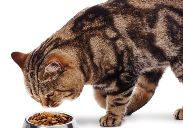 There are many reasons your pet may be turning its nose up at dinner – identifying behaviours at feeding time can help determine why (CNW Group/Canadian Animal Health Institute)