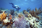 Bonefish Grill Partners With The Nature Conservancy To Help Restore Coral Reefs