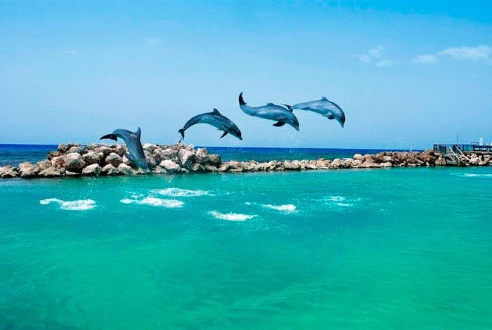 Six of Dolphin Discovery's facilities in the Mexican Caribbean have been certified under the global American Humane Conservation program for the welfare and humane treatment of the animals under their care.