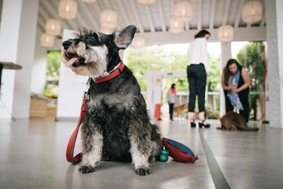 Purina BetterwithPets Forum 2018 Dog Attendee (PRNewsfoto/Nestlé Purina PetCare EMENA)