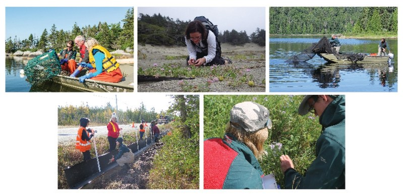 (Clockwise, from left to right): 1) Visitors participating in the Gone Crabbin' program, which removes invasive European green crabs, thereby restoring native eelgrass meadows and soft-shell clam populations (Photo: Parks Canada); 2) Queen's University professor, Dr. Karen Samis, inspects a patch of the endangered pink sand-verbena (Photo: Mike Collyer); 3) Parks Canada staff use an Alaskan trap net to capture and preserve native brook trout (Photo: Parks Canada); 4) Student volunteers assist Parks Canada staff with installing roadside deflection fencing to direct wildlife toward the ecopassages (Photo: Laura Sagermann); 5) Peter Tarleton, from Parks Canada, researches how bison affect the growth and survival of shrubs and small trees encroaching on the prairie (Photo: Melanie Robinson). (CNW Group/Parks Canada)