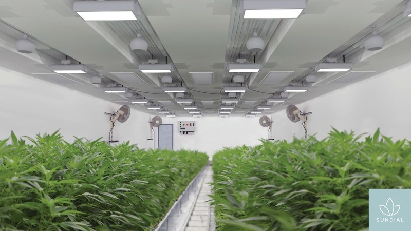 Rendering of the interior of one of Sundial's state-of-the-art custom built modular cultivation rooms. (CNW Group/Sundial Growers)
