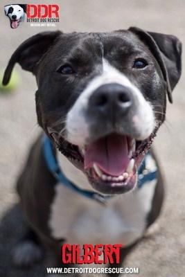 DMCU To Host Dog Adoption Event at Detroit Main Branch June 23