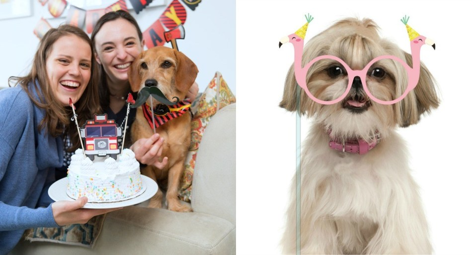 The Molly and Bandit Pet Party line from C.R. Gibson includes everything consumers need to throw an Instagram-worthy pet celebration.