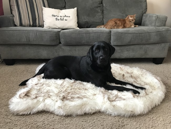 Memory Foam Dog Bed from Treat A Dog