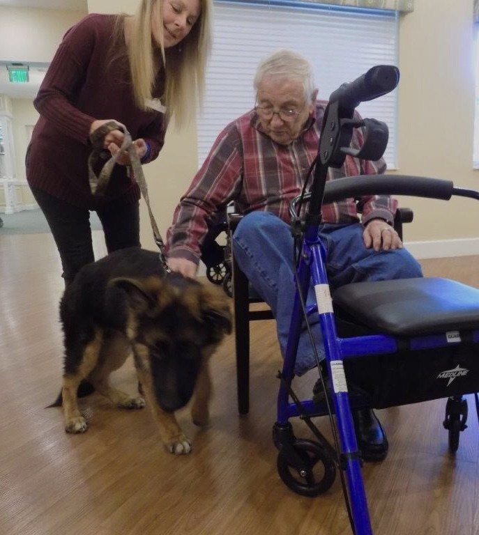 Remy the German Shepherd makes a new friend, Mr. John Casner,  during pet therapy at Market Street Memory Care Residence Viera's 'Caring for the Caregiver' Event.