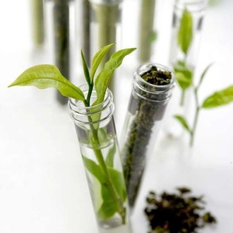 Newby Teas Contain Least Amount of Fluoride per Cup, Independent Study by Eurofins Lab Reveals