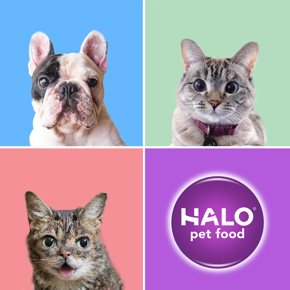 """Halo® announces leading feline """"furfluencer"""" Nala Cat will join forces with the brand's official spokespets Lil BUB and Manny the Frenchie to make a difference for all animals."""