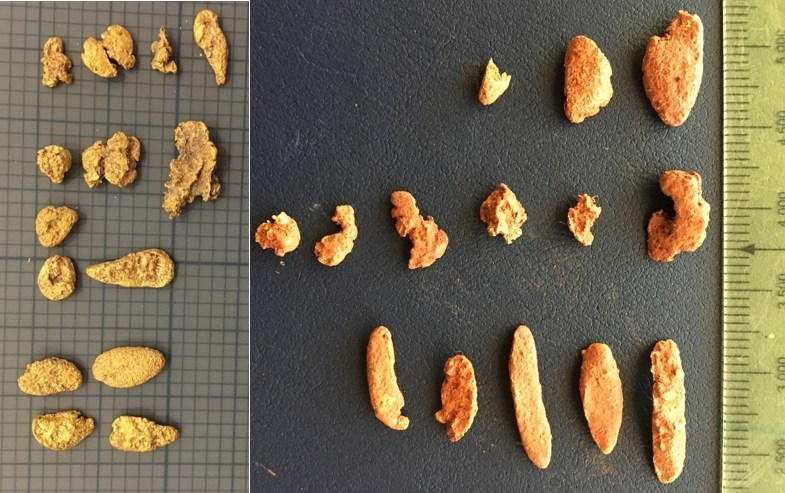 Figure 2: Mt Roe Project: Recently Collected Pitted 'Melon Seed' Gold Nuggets from Conglomerate Area (left image small divisions are two millimetres; right image small divisions are millimetres). (CNW Group/NxGold Ltd.)