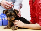 Vaccinations are a significant part of your pet's healthcare (CNW Group/Canadian Animal Health Institute)