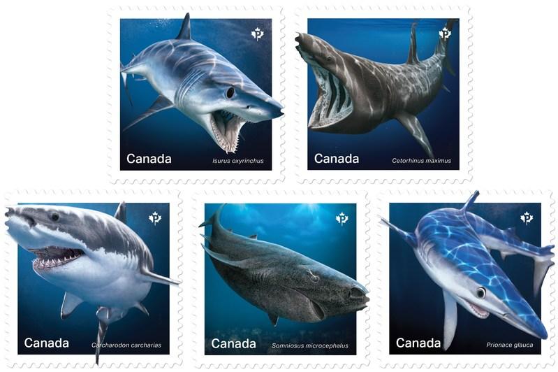 Des timbres mettent en vedette des requins du Canada (Groupe CNW/Postes Canada)