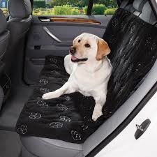 Having Dogs As Passengers Increases the Risk of Accidents!
