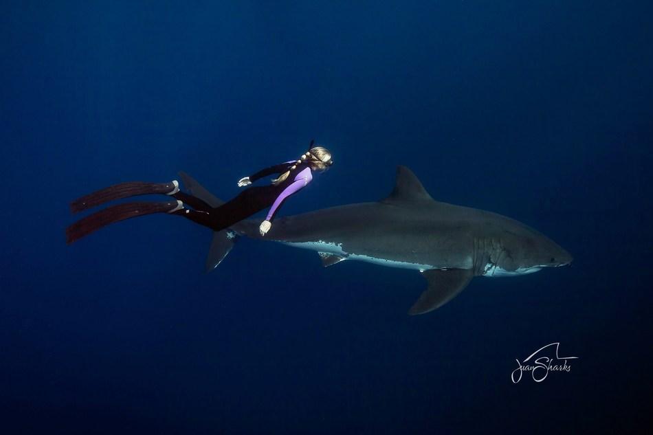 Ocean Ramsey -- Shark Behavior Expert