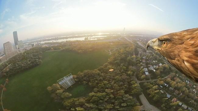 """No vídeo """"Vienna from an eagle's eye view"""", disponível no YouTube, o Turismo de Viena mostra a cidade a partir da perspectiva de uma águia. © Turismo de Viena/Red Bull Media House"""