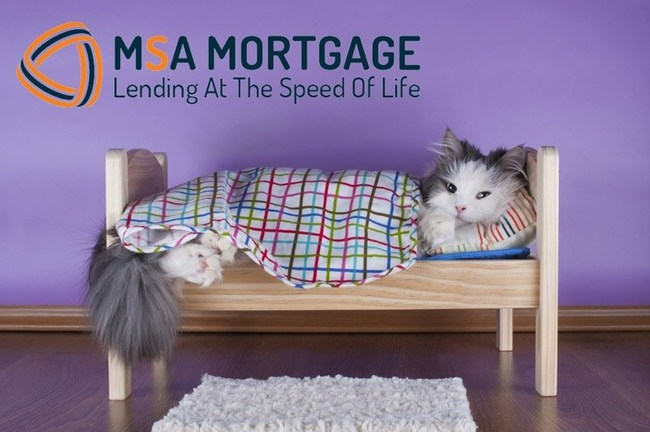 MSA Mortgage and Encore Realty sponsor the MSPCA (The Massachusetts Society for the Prevention of Cruelty to Animals) Cat Adoption Drive to be held on Saturday, July 25.