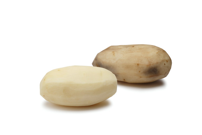 Using gene editing technology such as CRISPR-Cas9, bruising and browning of potatoes can be reduced, eliminating some of the 3.6 billion lbs. of potato food waste each year. © 2018 J.R. Simplot Company