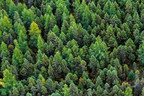 A healthy forest (CNW Group/Genome British Columbia)