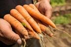 BASF a finalisé l'acquisition de la division internationale des semences potagères de Bayer, exploitée principalement sous la marque NunhemsMD. L'entreprise de semences potagères acquise comprend 24 espèces et quelque 2600 variétés. (Groupe CNW/BASF)