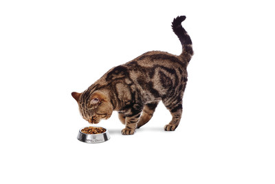 Keep Up with Your Cat's Health